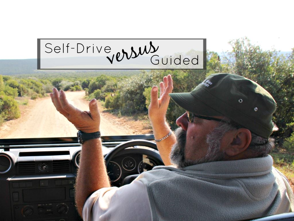 Self-Drive versus Guided Game Drives – the pros and….pros