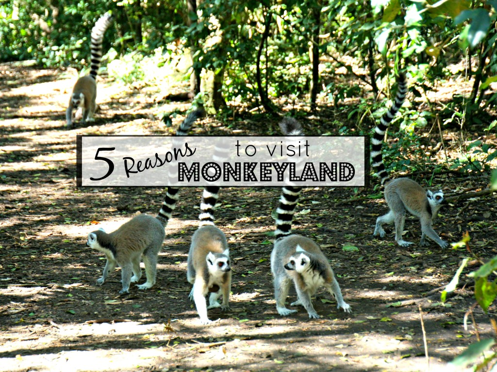 5 Responsible Reasons to Visit Monkeyland, Birds of Eden and Jukani
