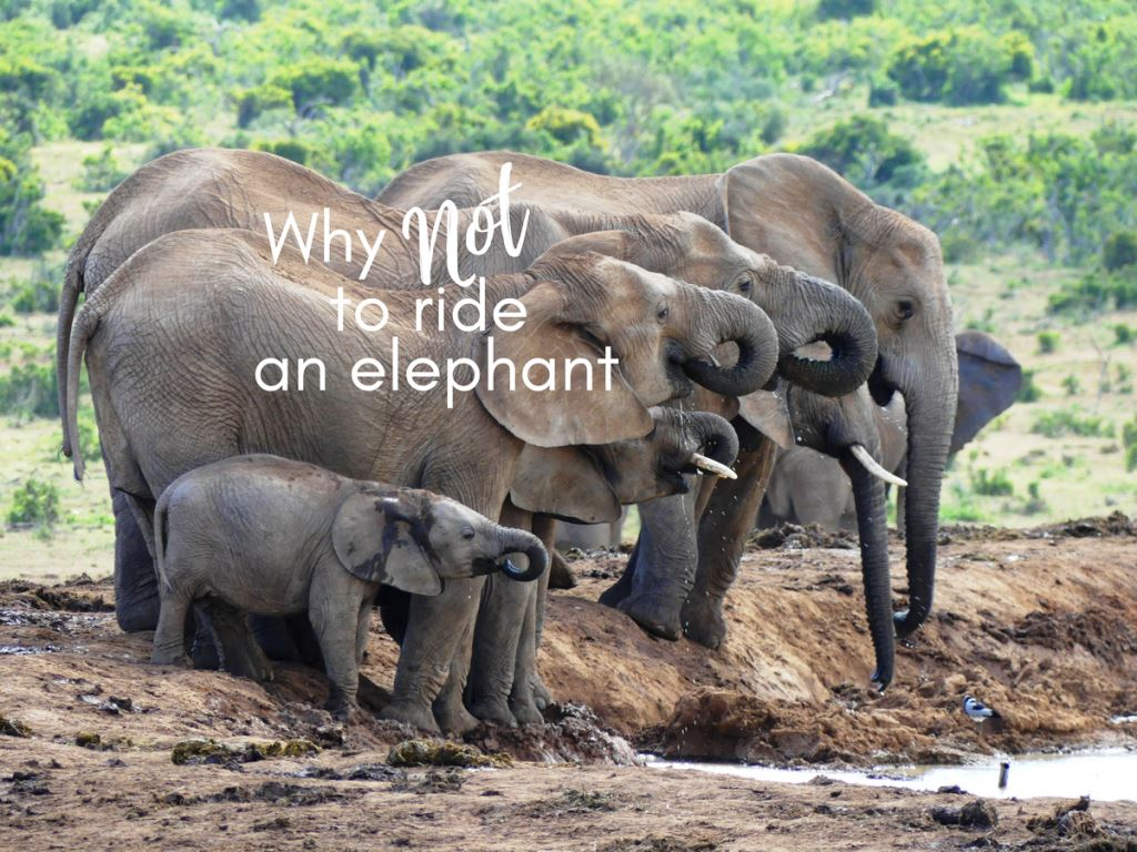 Why Not to Ride an Elephant – A Child Explains