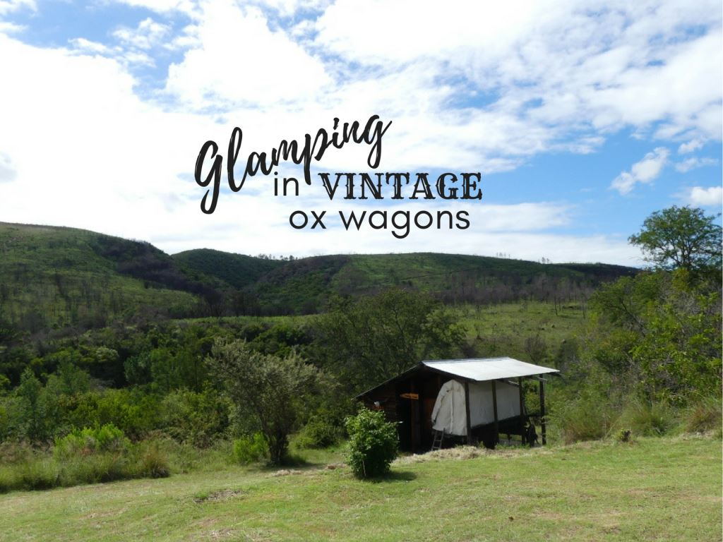 Glamping in Bergrivier's Vintage Ox Wagons